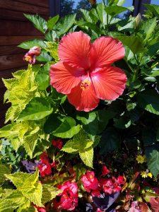 Zone 5 & 6 gardening FlowerChick.com