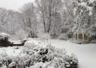 Winter Garden by FlowerChick.com