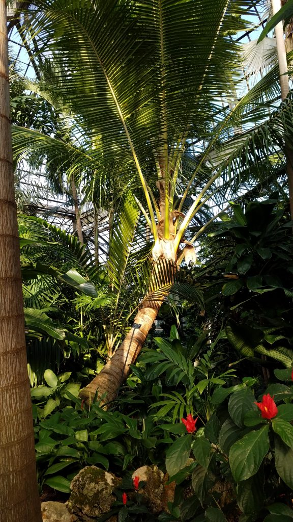 Visit Chicago's Lincoln Park Conservatory