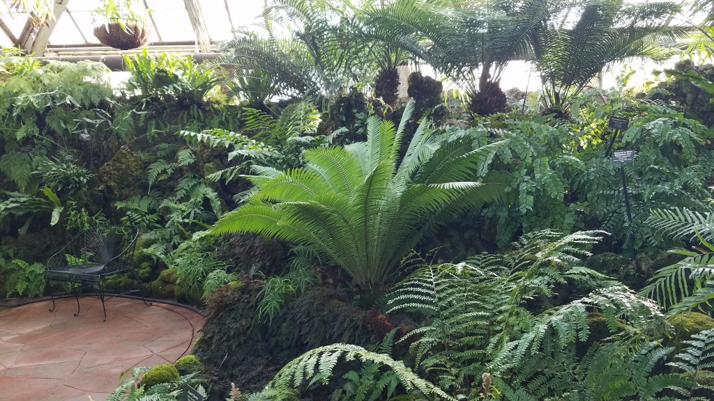 The Lincoln Park Conservatory Fern Room by FlowerChick.comThe Lushness and Diversity of the Fern Room Fern Room