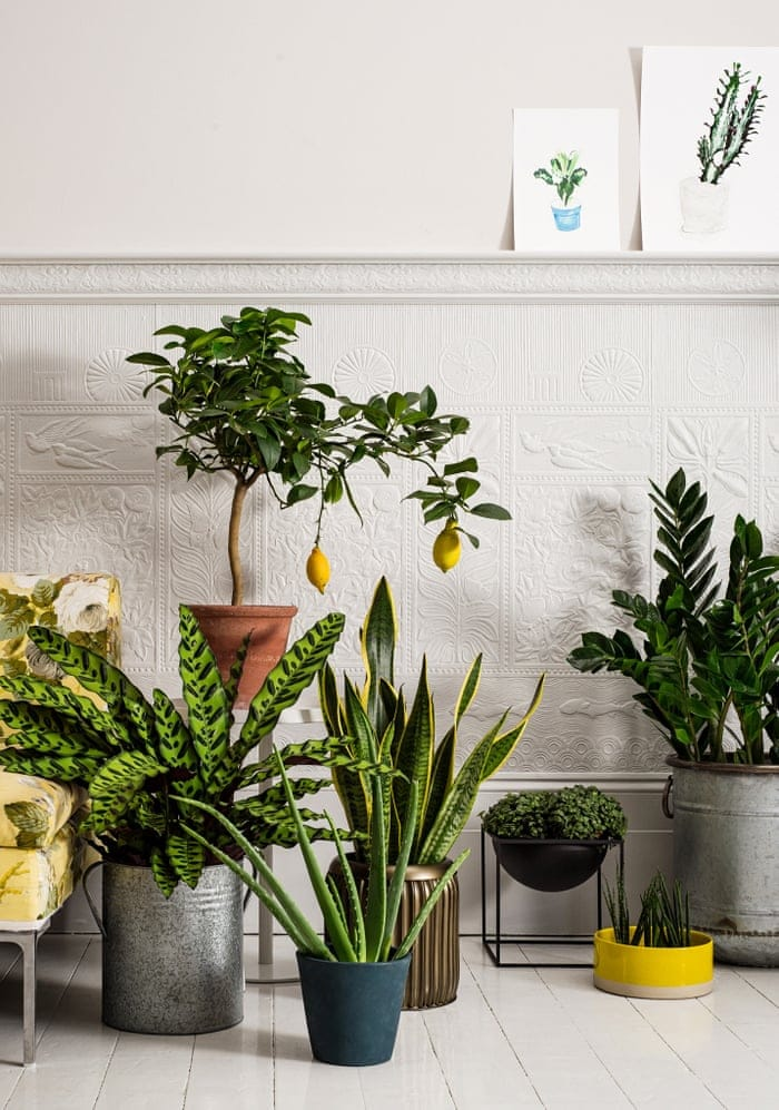 Plant Displays for Happy Plants by FlowerChick.com