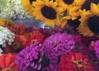 Best Flowers To Grow From Seed by FlowerChick.com