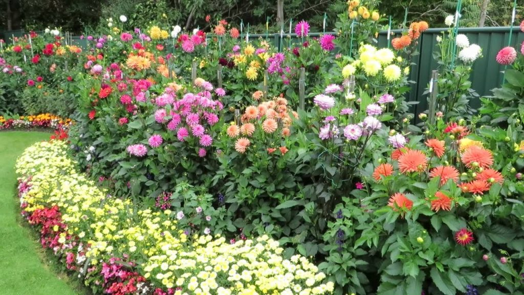 Summer Blooming Bulbs for Zone 5 & 6 Dahlias by FlowerChick.com