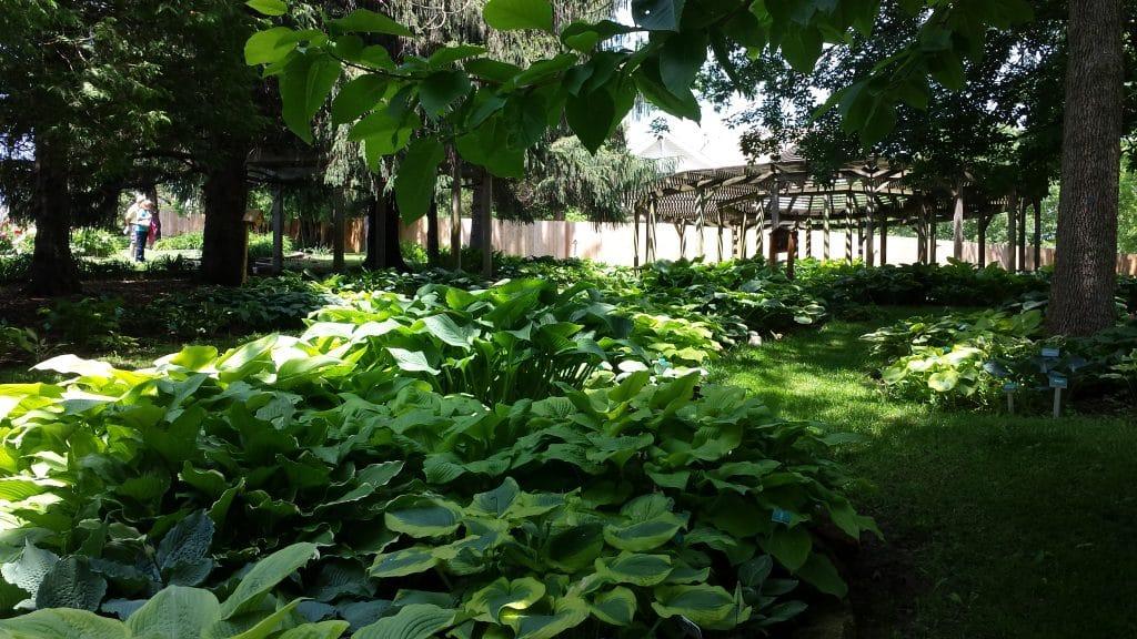 Dubuque Arboretum and Botanical Garden by FlowerChick.com