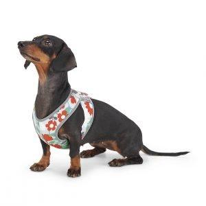 Floral Dog Harness at FlowerChick.com