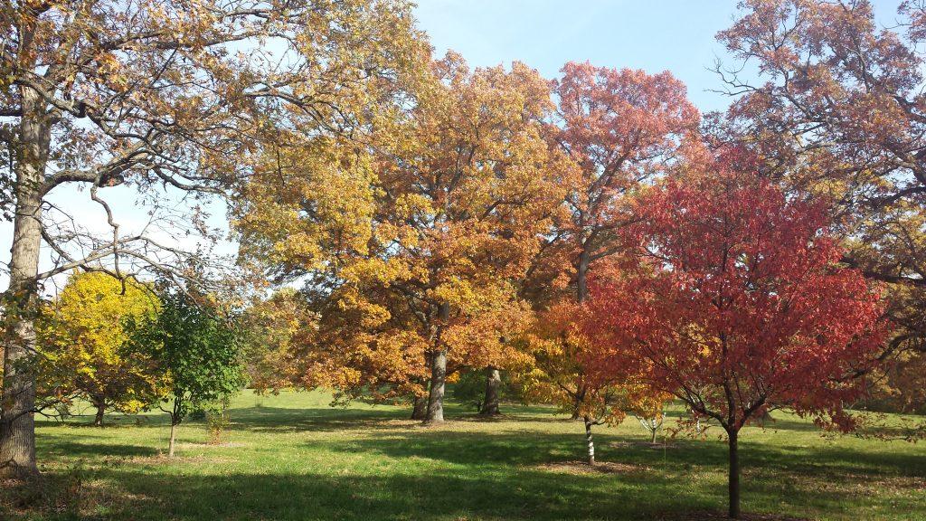 Morton Arboretum by FlowerChick.com
