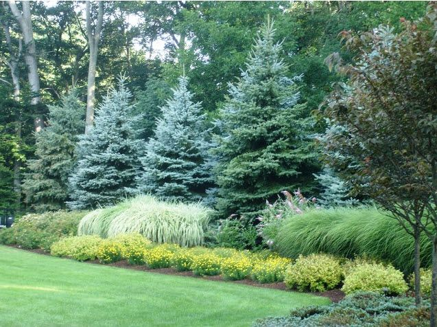 Privacy Trees and Shrubs for Zones 5 & 6 by FlowerChick.com