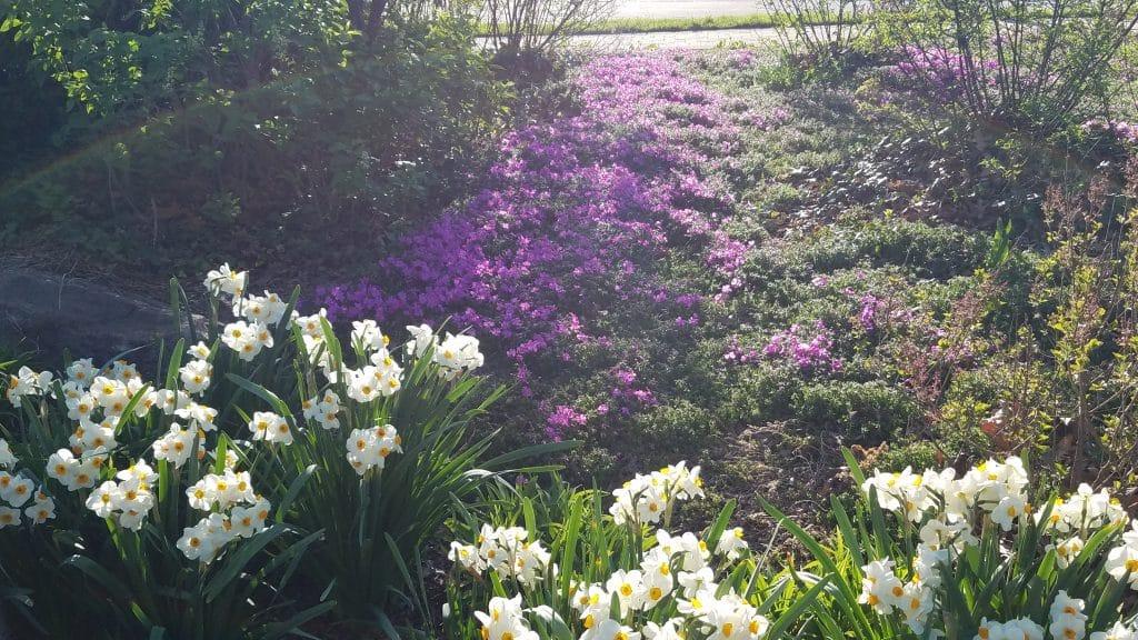 Visit Lilacia Park