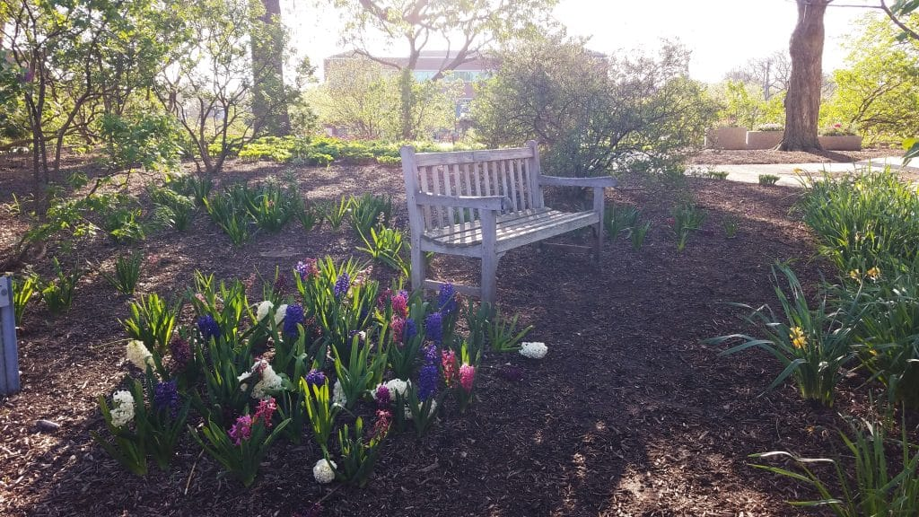 Quiet Spot To Sit At Liliacia Park Lombard IL by FlowerChick.com