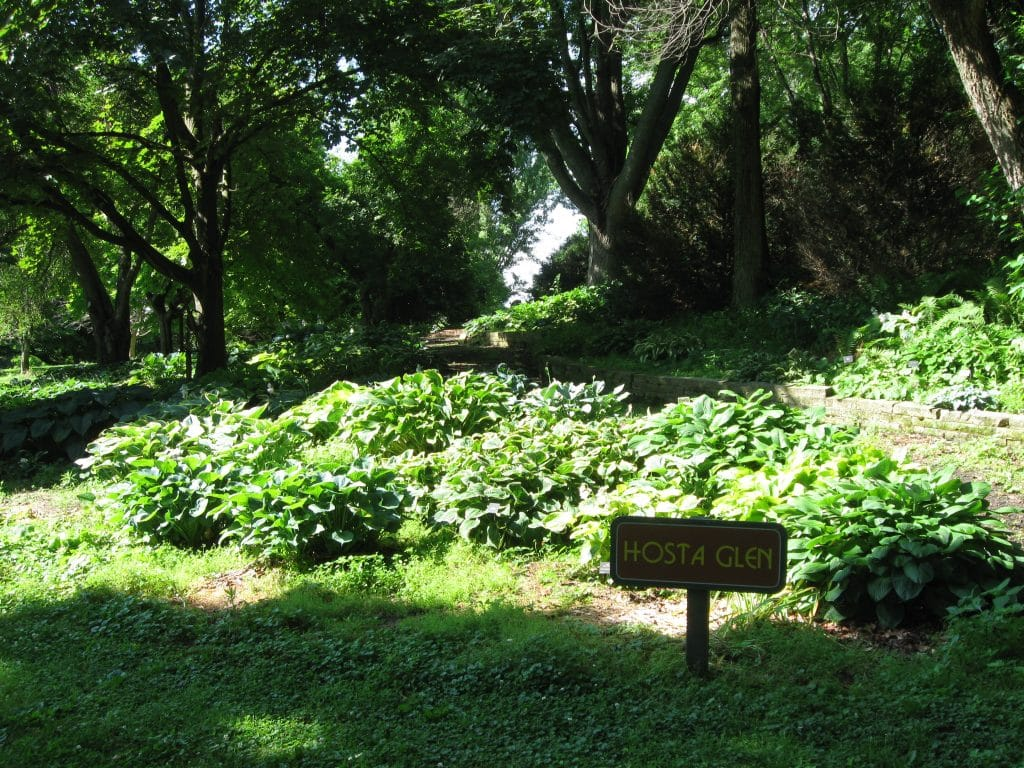Hosta Garden at Bickelhaupt Arboretum in Clinton Iowa