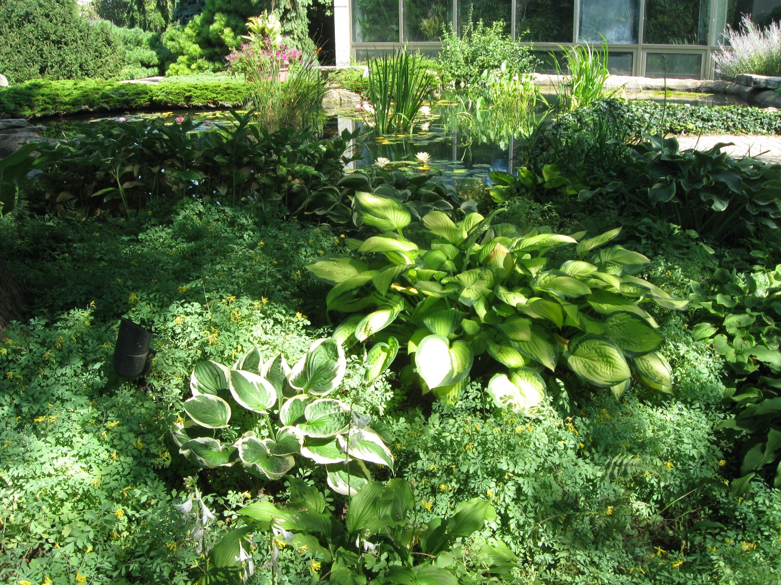 Hosta Garden and Outdoor Goldfish Pond at the Quad City Botanical Center by FlowerChick.com