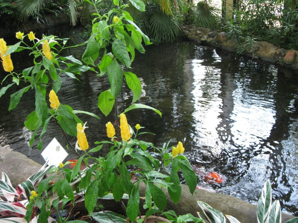 Tropical Sun Garden at Quad City Botanical Center