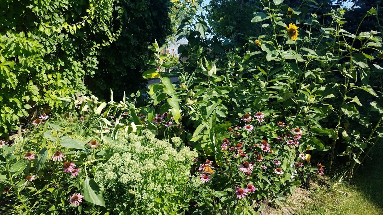 Bees & Butterflies All Abuzz in the Pollinator Gardens