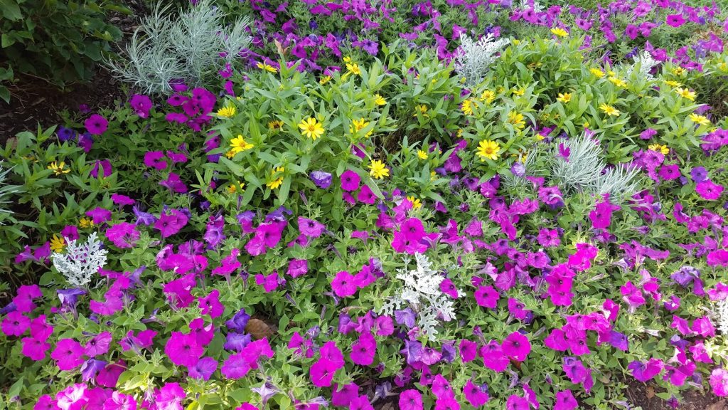 Quad Cities Gardens: Visit These 8 Scenic Gems by FlowerChick.com