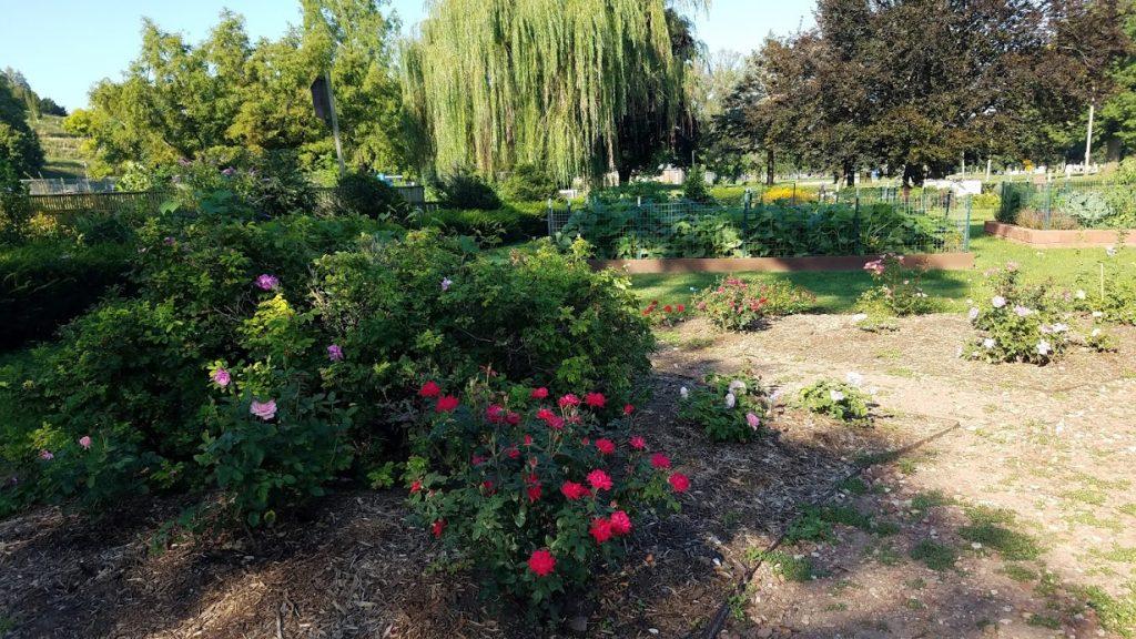 Riverside Park Gardens by FlowerChick.com