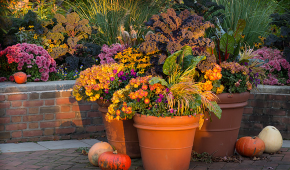 Fall Container Groupings by FlowerChick.com