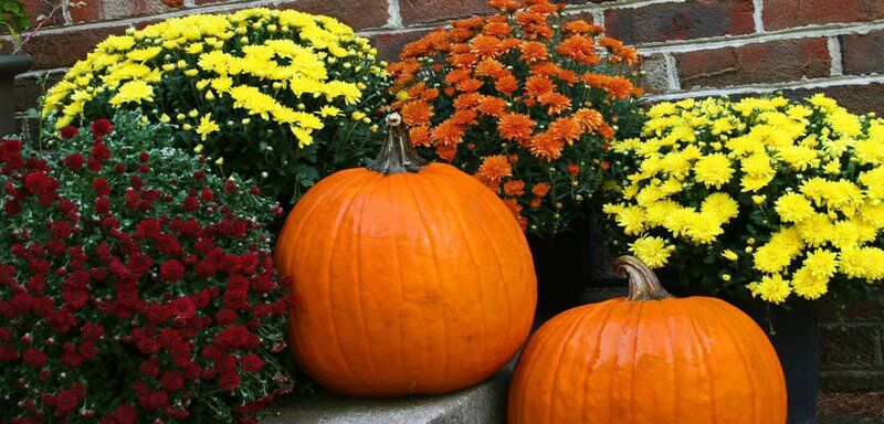 Fall Containers Mums by FlowerChick.com