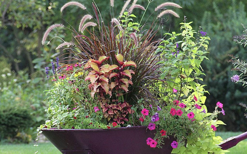Interesting Container Gardening Ideas