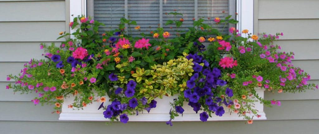 Window Box Ideas by FlowerChick.com