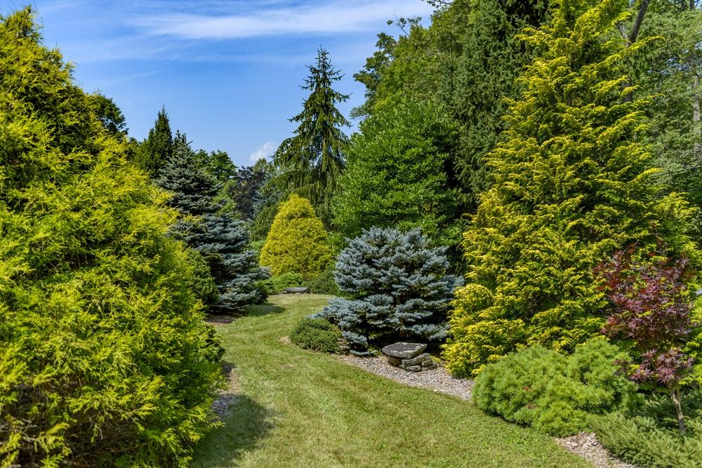 Conifers by FlowerChick.com