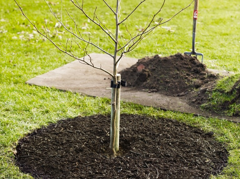 Best Way To Plant Trees By FlowerChick.com