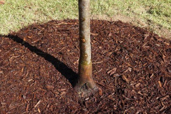 How To Plant A Tree by FlowerChick.com