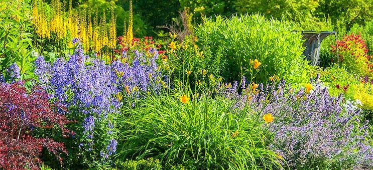 Easy Care Perennials For Full Sun Flowerchick.com