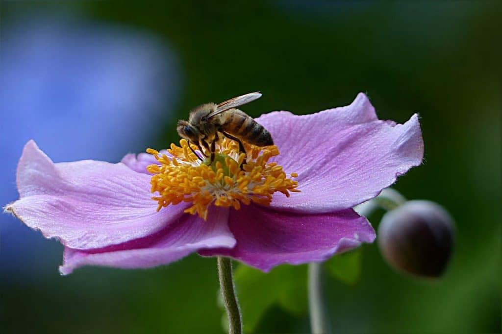 Bee Friendly Plants by FlowerChick.com