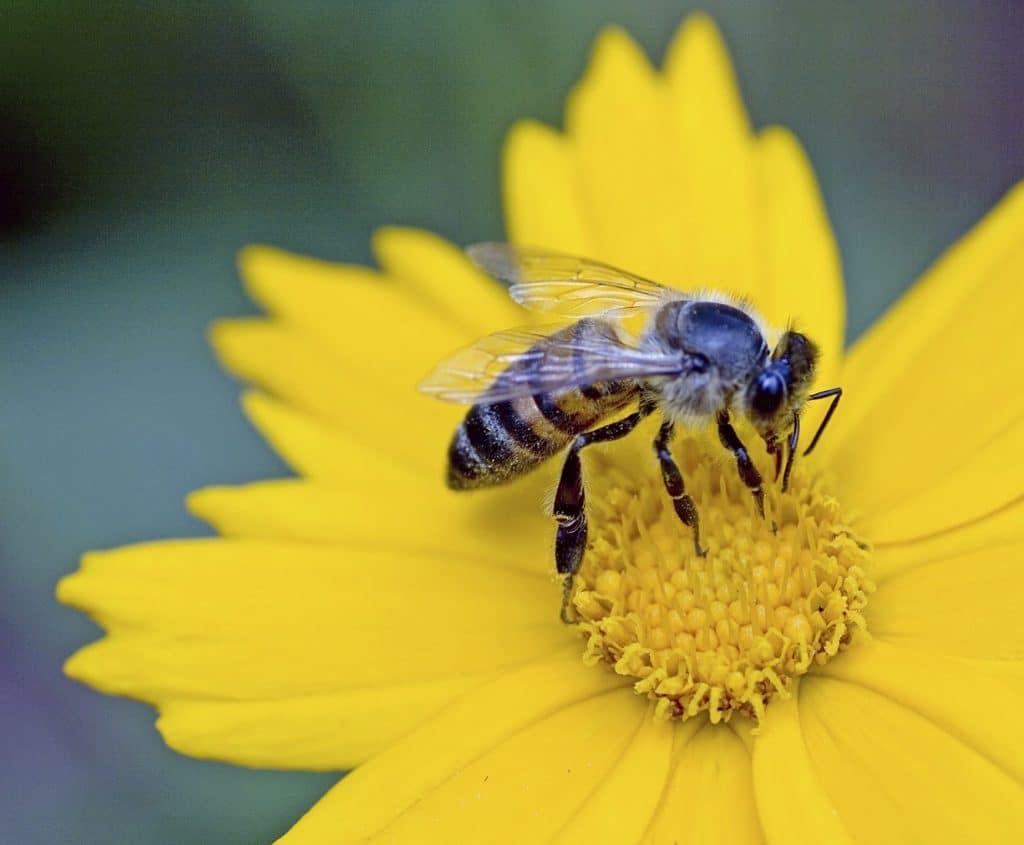 Create A Bee Friendly Garden By FlowerChick.com