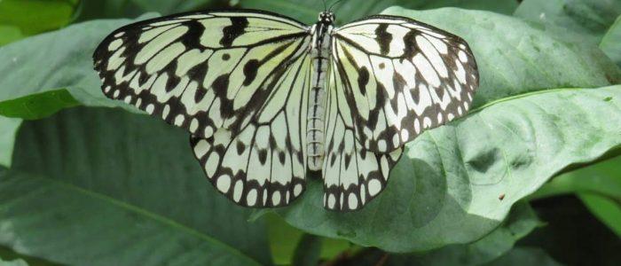 Butterfly Exhibit at Reiman Gardens by FlowerChick.com