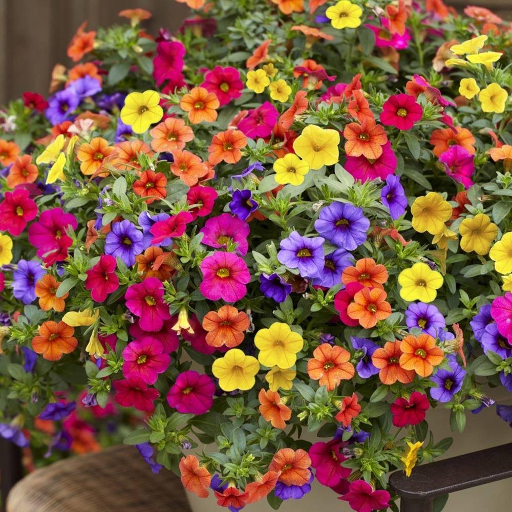 Iowa Gardens:  Showcasing The Hawkeye State by FlowerChick.com