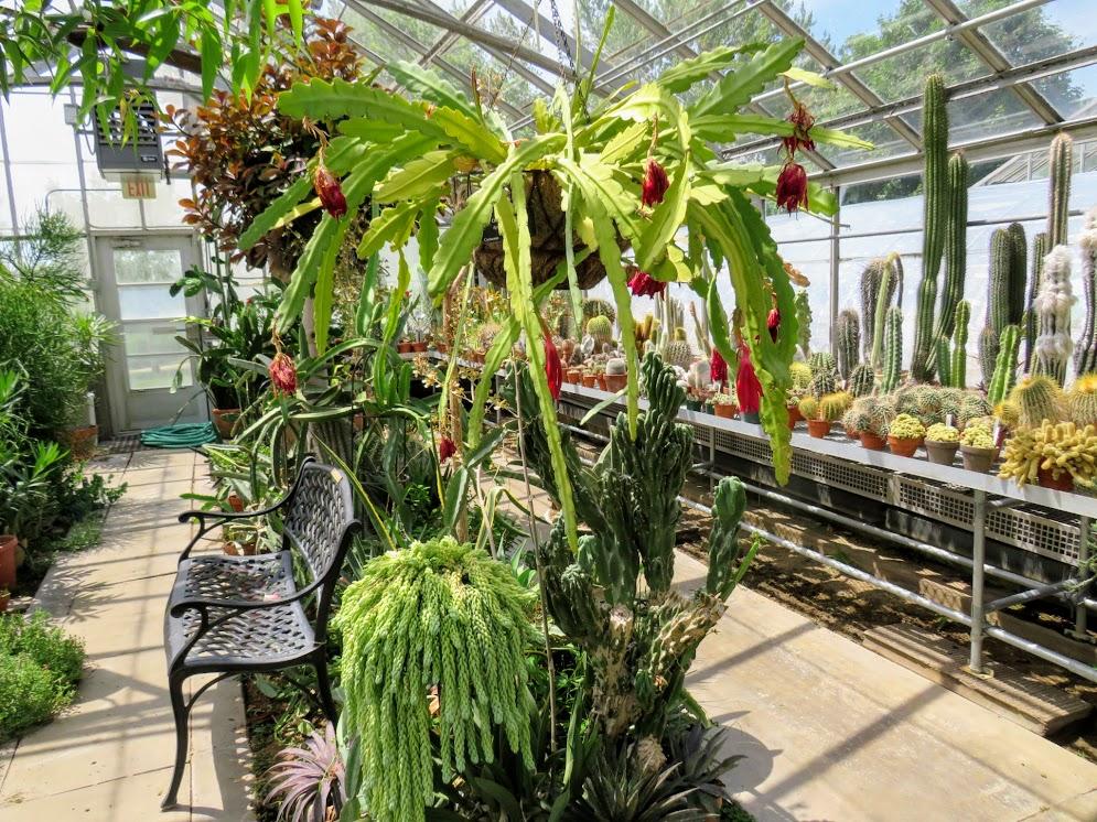 The Desert Room at UNI Botanical Center by FlowerChick.com