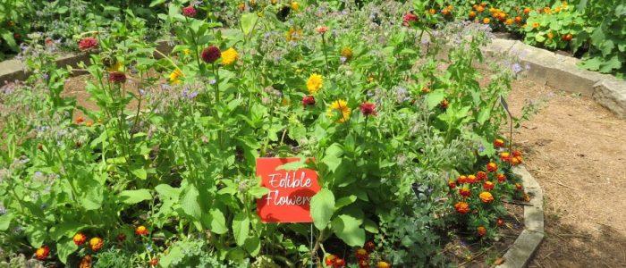 Edible Flower Exhibit at Reiman Gardens