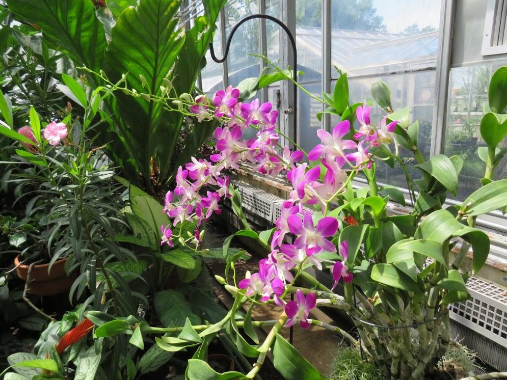 Iowa Gardens by FlowerChick.com