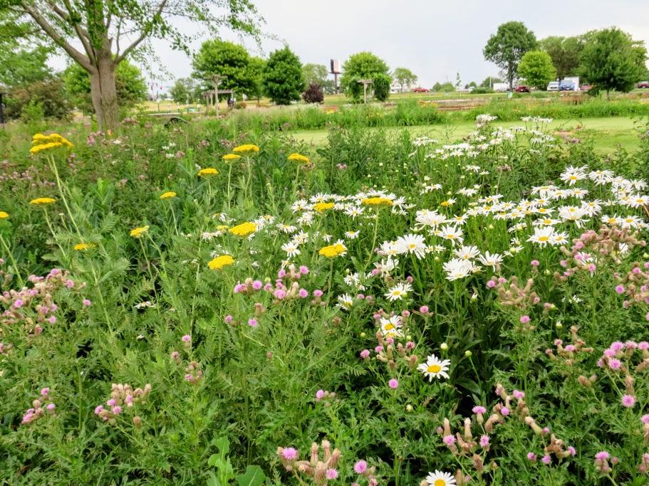 Pollinator Garden at Noelridge Park Iowa by FlowerChick.com Iowa Gardens:  Showcasing The Hawkeye State