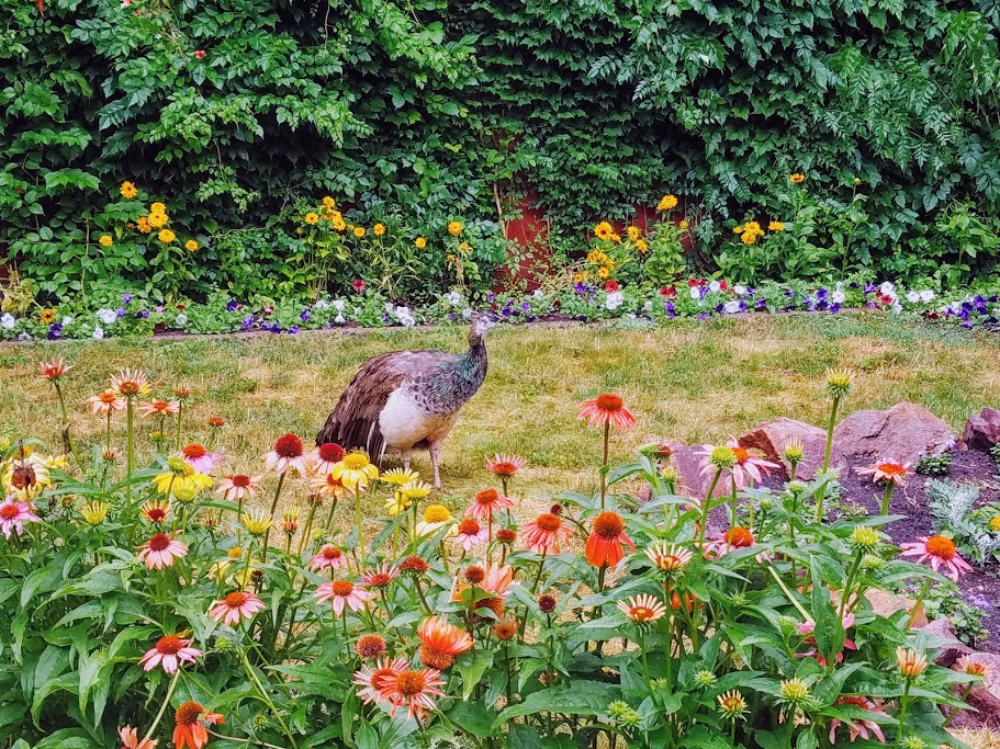 Schell's Brewery Gardens and Pheasant New Ulm MN by FlowerChick.com