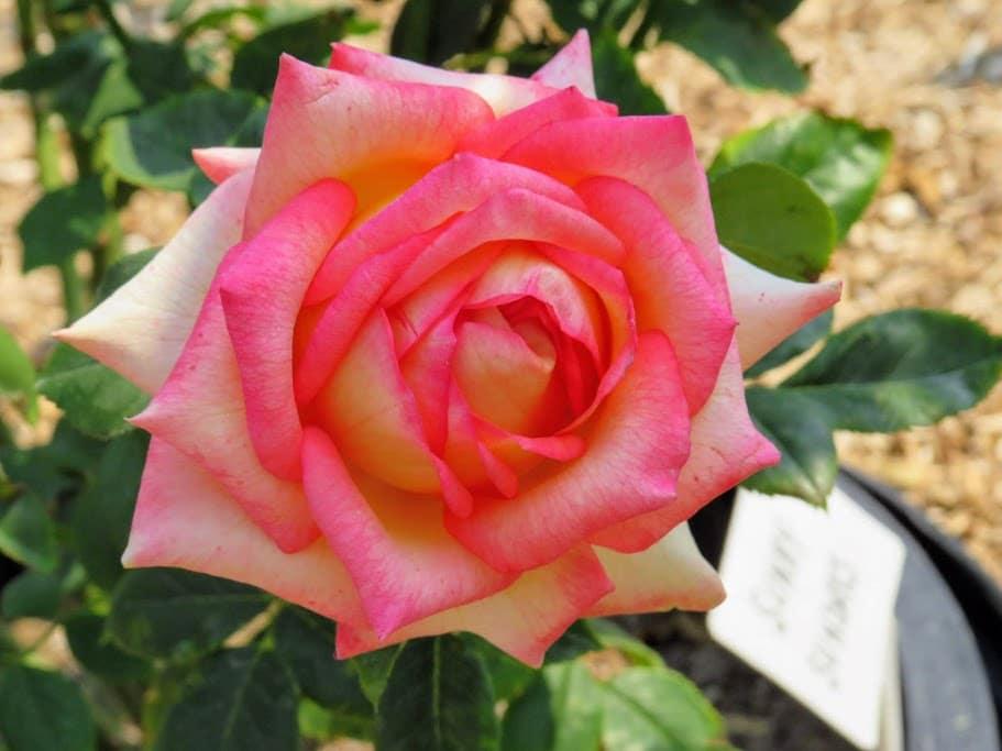 Lake Geneva Area Gardens FlowerChick.com