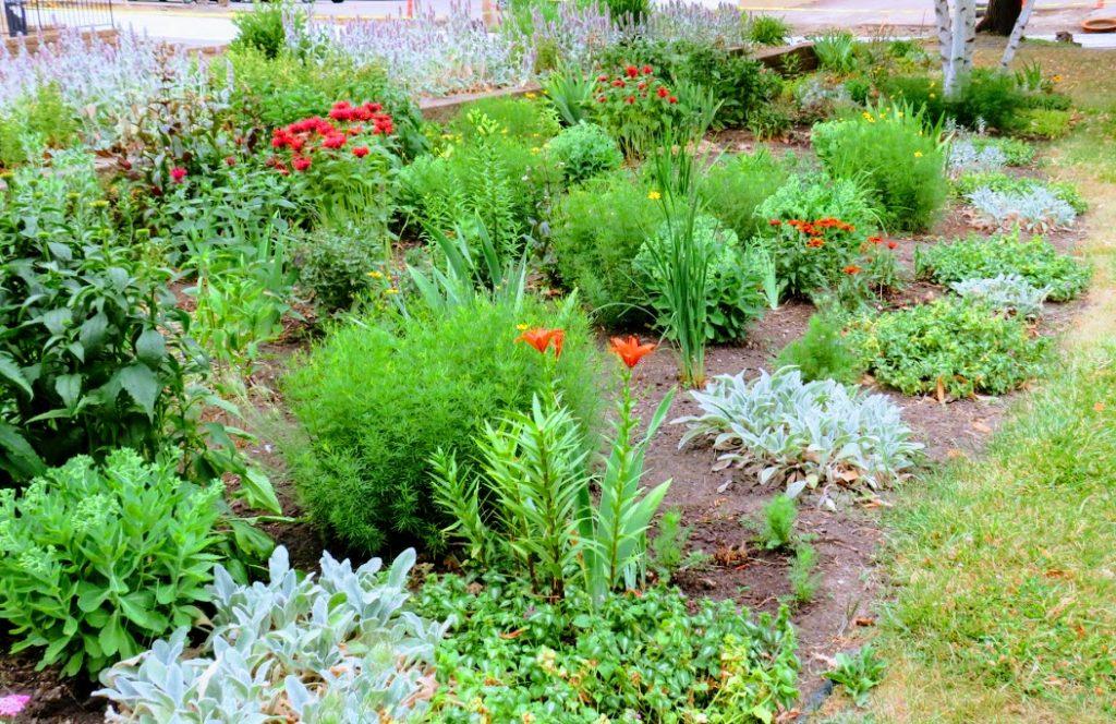 Vibrant Perennials &Annuals at Malda Farnham Park by flowerChick.com