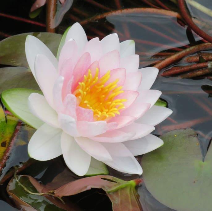 Exploring Iowa's Gardens with FlowerChick.com