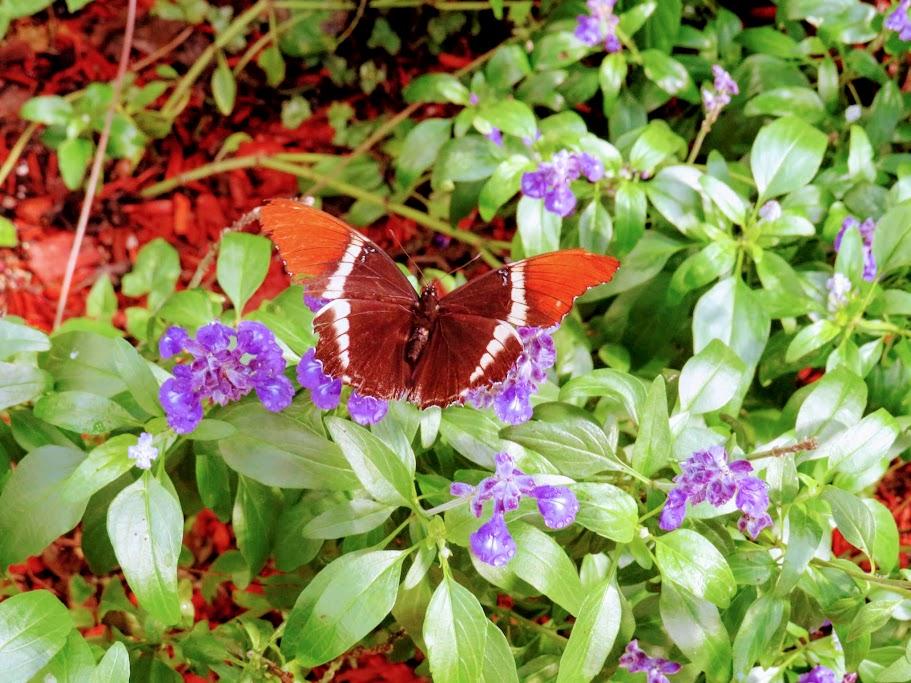 Butterfly House Mackinac Island by FlowerChick.com