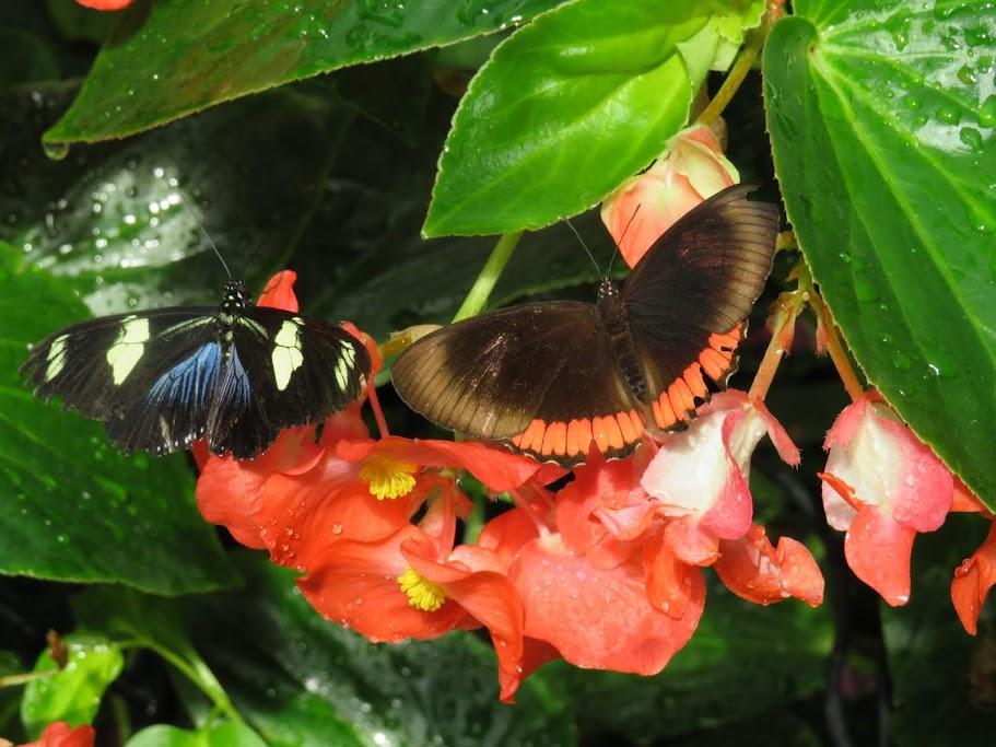 Butterflies on Mackinac Island by FlowerChick.com