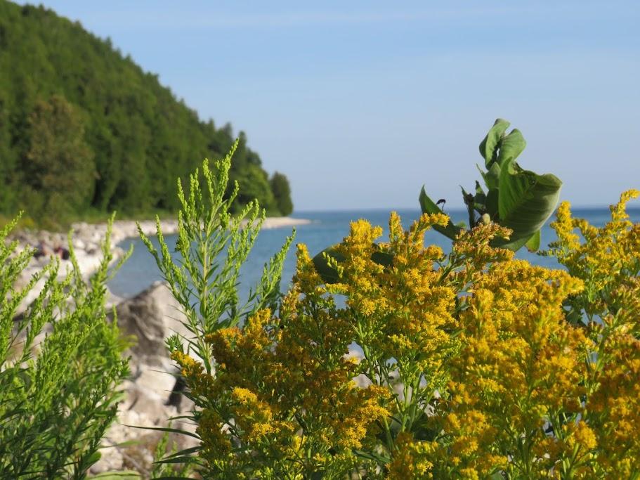 Wildflowers on Mackinac Island by FlowerChick.com