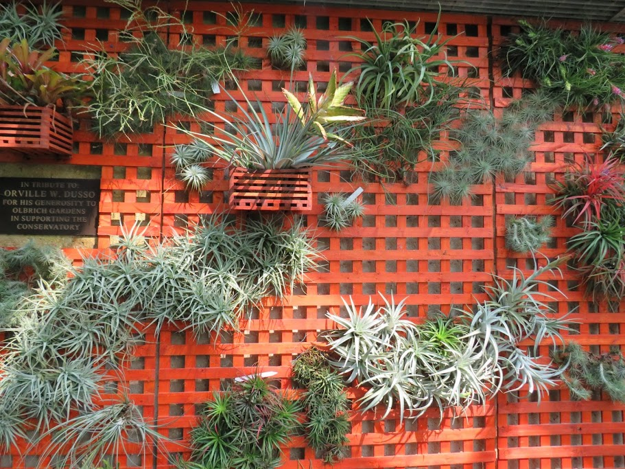 Air Plants At Olbrich