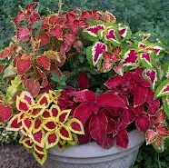 Fall Container Gardening