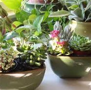 Time To Refresh Your Houseplants
