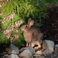 Rabbit Proof Your Garden